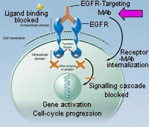 EGFR_02