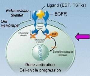 EGFR_03